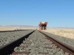 Durch die Wüste per Bahn