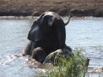 Spielende Elefanten